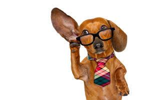 Dog hearing